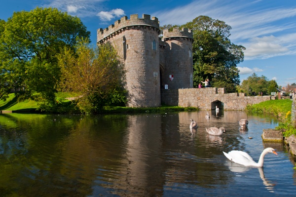 Swans in the moat of Whittington Castle