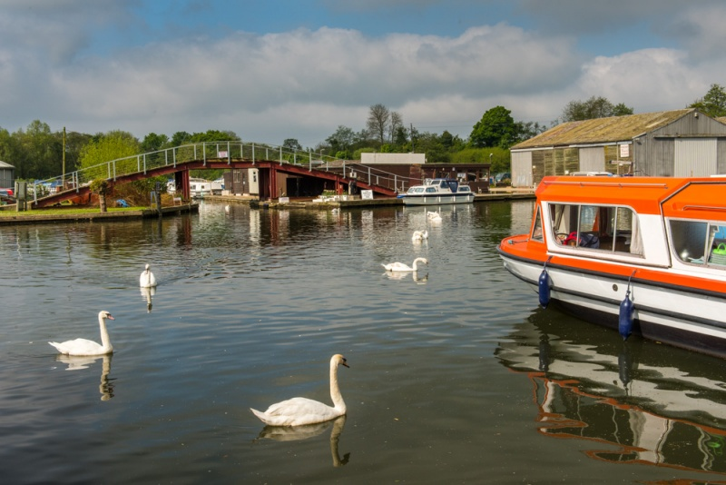 Swans on the River Bure at Wroxham