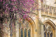 Oxford Travel Tips