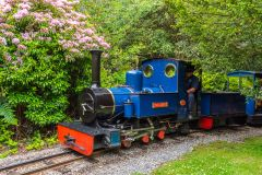 A steam locomotive in Exbury Gardens
