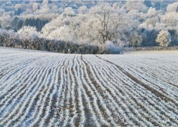 Winter Field, Little Rissington, Gloucestershire