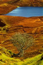 The quiraing, Trotternish, Skye