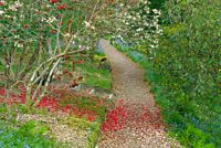 Woodland path strewn with flower petals