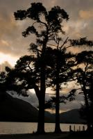 Lake Buttermere trees, Lake District