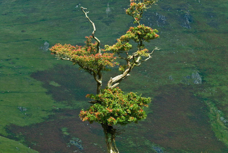 Tree at Crummock Water, Lake District