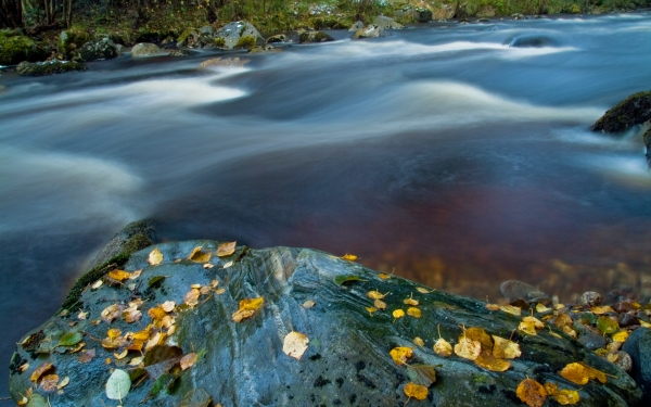 River Nethy, autumn leaves