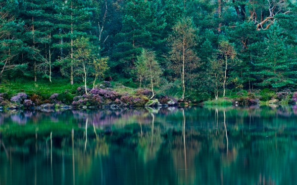 Tarn Hows, Lake District National Park